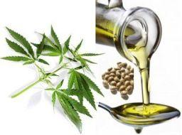 hemp-seed-oil1image