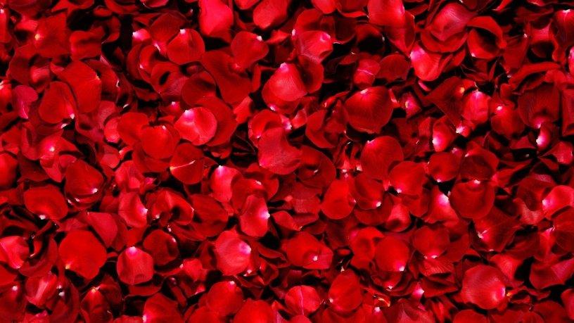 Rose-Petals-Wallpaper-HD-Wide